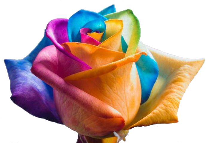 colorful_flowers_11444